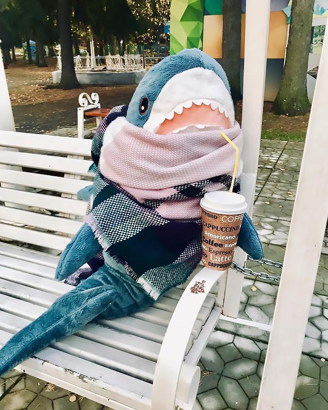 основе фотки акула из икеи широкую известность только